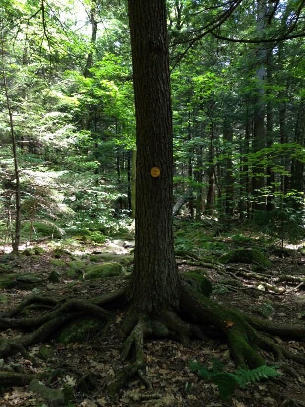 Trail marker, North Mountain Trail, Catskills, New York