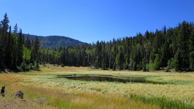 Meadow, Fishlake National Forest, Utah