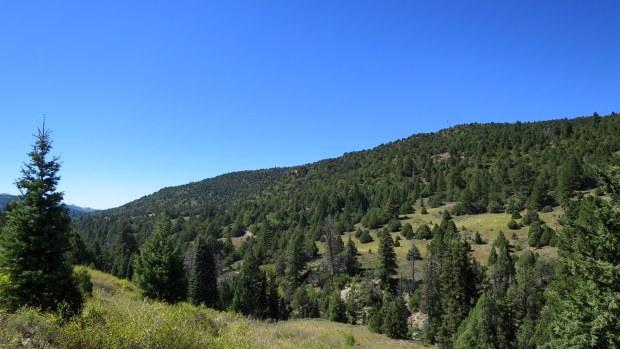 Crossing another meadow, Rattlesnake Trail, Ashdown Gorge Wilderness, Dixie National Forest, Utah