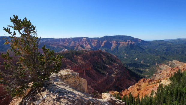 Spur from the Rattlesnake Trail to overlook Cedar Breaks National Monument, Ashdown Gorge Wilderness, Dixie National Forest, Utah