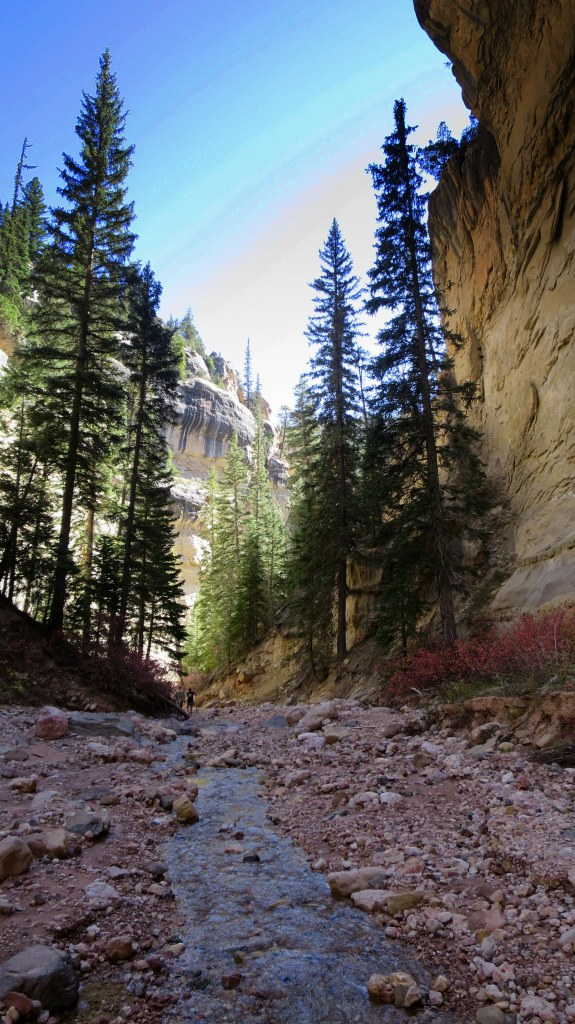 Ashdown Gorge Wilderness, Dixie National Forest, Utah
