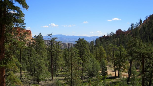 Looking towards mouth of amphitheater, Queen's Garden Trail, Bryce Canyon National Park, Utah