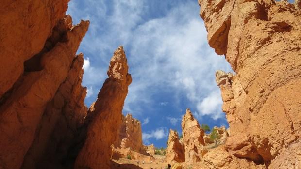 Looking up, Wall Street, Navajo Loop Trail, Bryce Canyon National Park, Utah