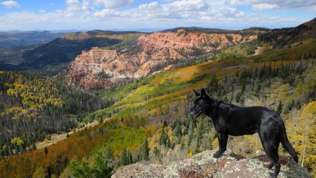 Abbs, Near Marathon Trail, Dixie National Forest, Utah