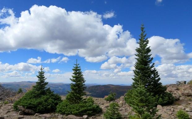 Near Marathon Trail, Dixie National Forest, Utah