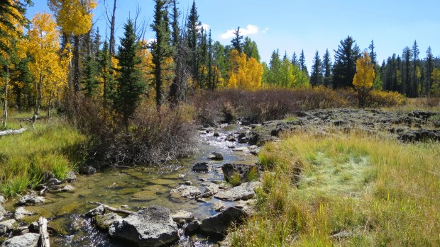 Duck Creek with a flat patch of grass where an elk had slept the previous night, Dixie National Forest, Utah