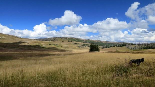 Meadows near Brian Head Peak, Dixie National Forest, Utah