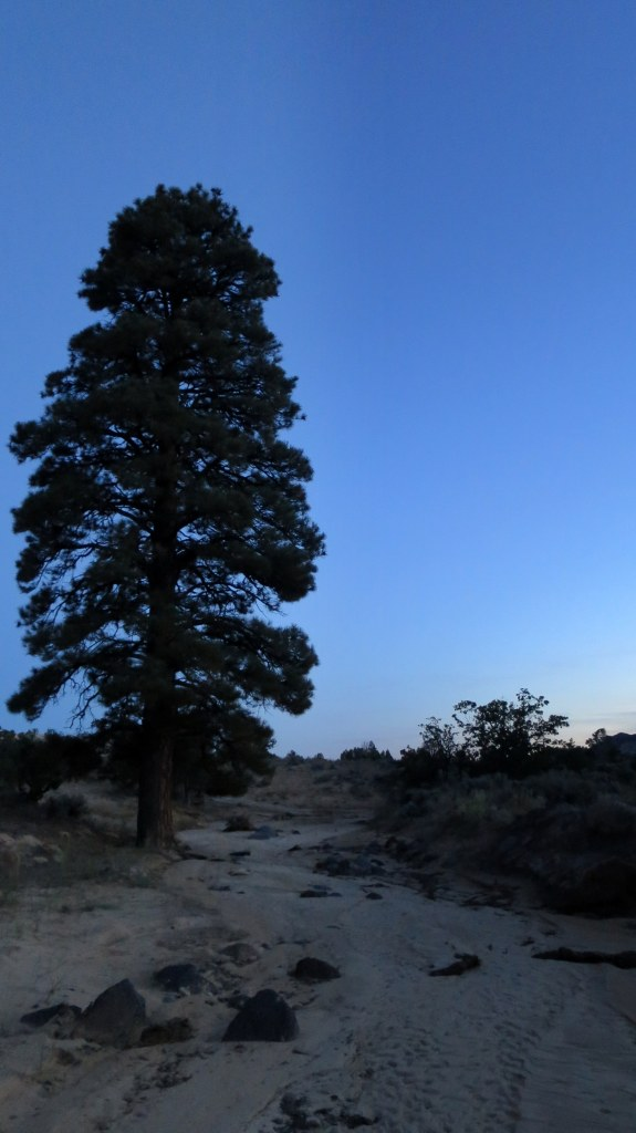 Wash near camp glowing blue in evening, Burr Trail, Grand Staircase-Escalante National Monument, Utah