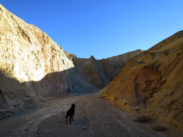 """Abby's thought-bubble says, """"What is this? What are we doing here??"""", Desolation Canyon, Death Valley National Park, California"""