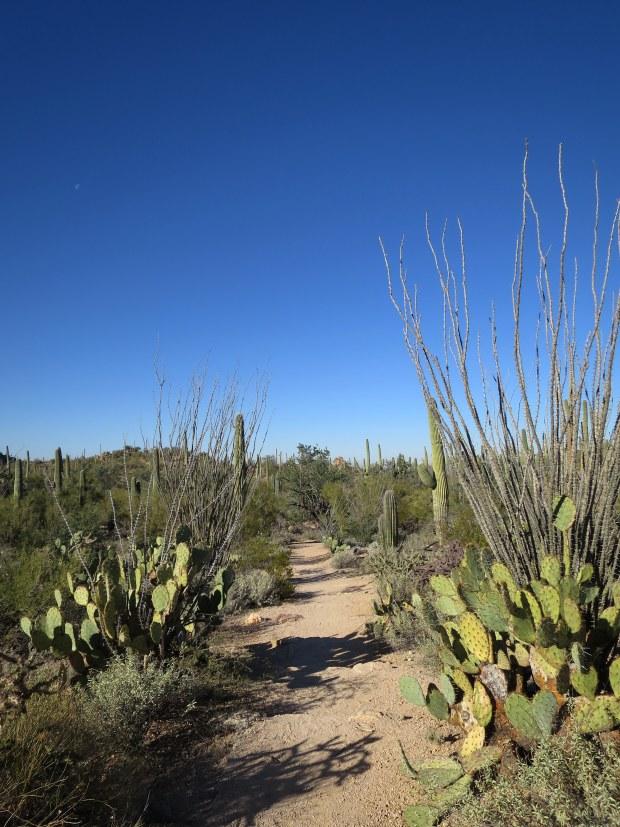 Valley View Overlook Trail, Saguaro National Park, Arizona