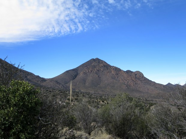 Pine Tree Trail, Aguirre Springs National Recreation Area, New Mexico