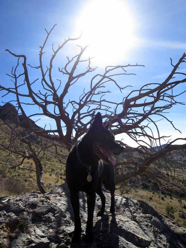Abby, Soledad Canyon Recreation Area, New Mexico