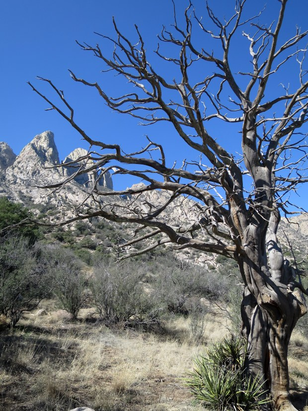 Near the trailhead in Aguirre Springs, Baylor Pass Trail, Organ Mountain-Desert Peaks National Monument, New Mexico