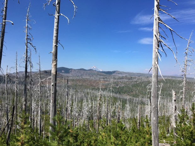 2016-09-08-oregon_redwoods_iphone-035