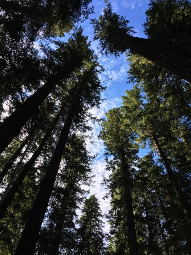 2016-09-08-oregon_redwoods_iphone-078