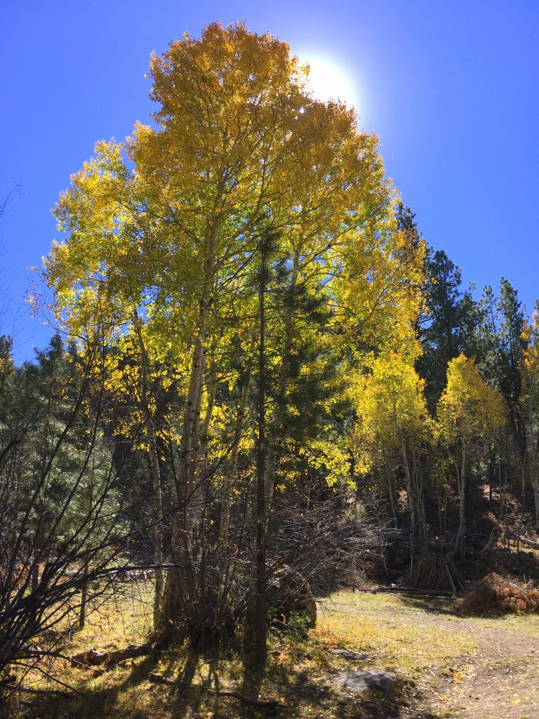 Whipple Valley Trail and Pine Valley Recreation Area ...