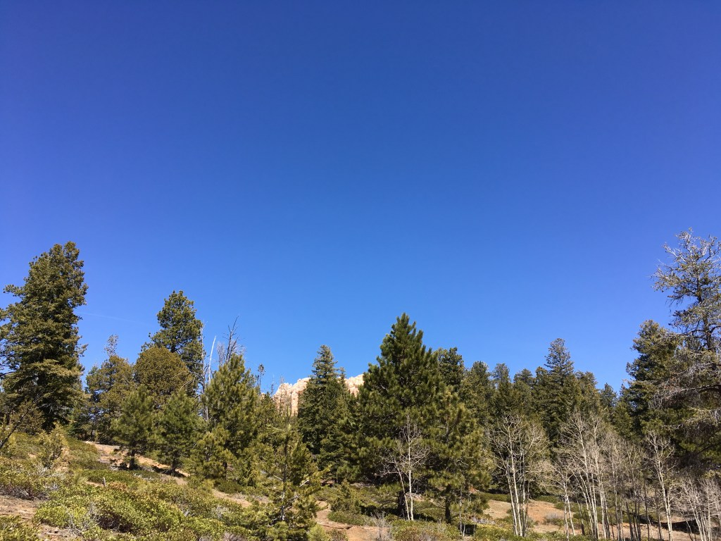 From Antelope to Horny Toads: A Wonderful Hike on the ...