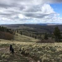 Hiking Escudilla Mountain and a Bonus Lake Stop