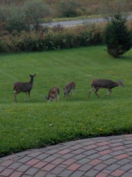 """""""Breakfast guests"""""""