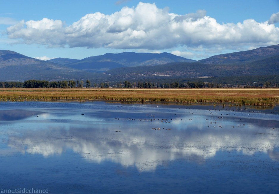 Wetlands in Kootenai River valley.