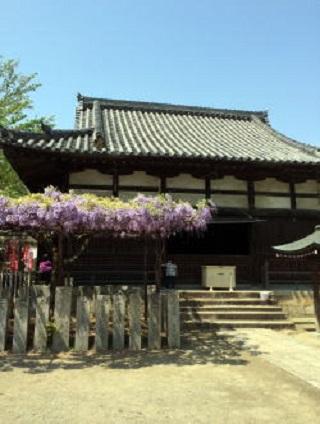 西國五犯札所葛井寺の藤祭り