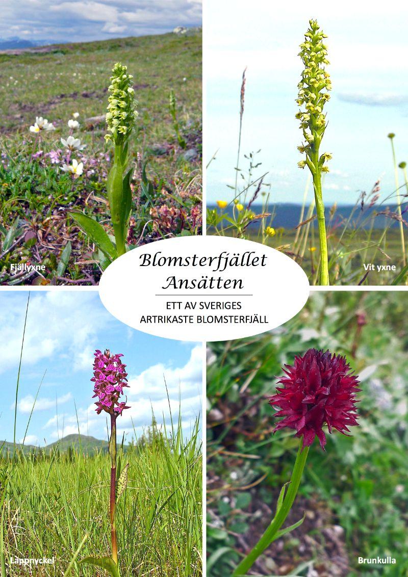 Blomsterrikedom på Blomsterfjället Ansätten. Foto © Föreningen Blomsterleden.