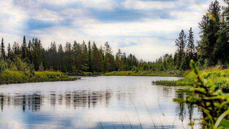 Fiska hos Lillholmsjö Gästgivargård och camping.