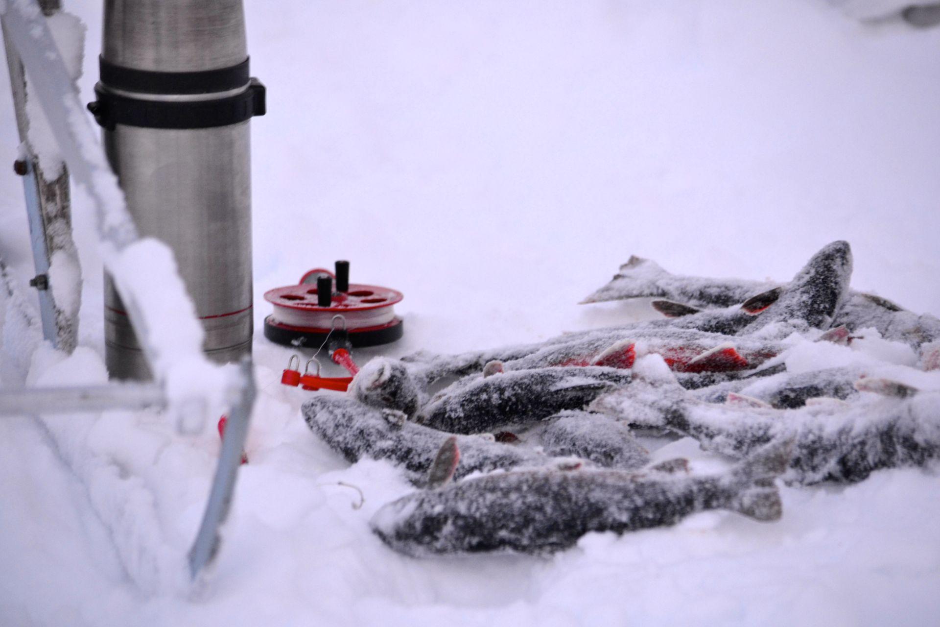 Pimpelfiske på Åkersjön med kaffe i en termos och fin fångst av röding. Foto © flyttatillfjallen.se