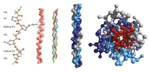 Investigación sobre los cambios en las propiedades físicas del colágeno