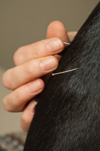 acupuncture needles on a small animal