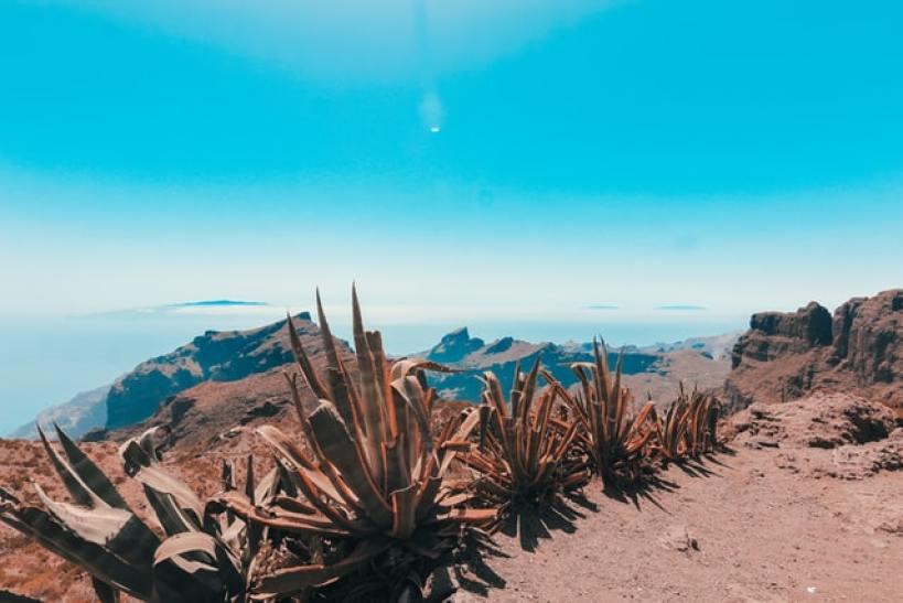 Tenerife. Verano. Disfrutar.