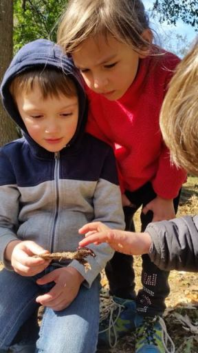 Touching a beetle