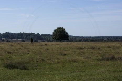 Lüneburger Heide (14)