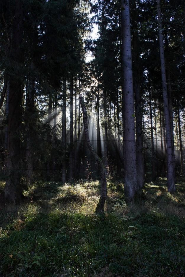 Herbstliches Petergensfeld (1)