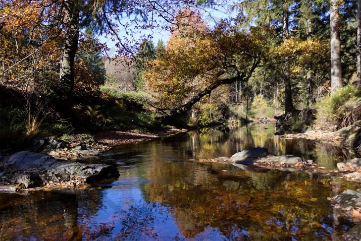 Herbstliches Petergensfeld (16)