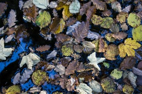 Herbstliches Petergensfeld (4)