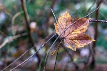 Herbstliches Petergensfeld (6)