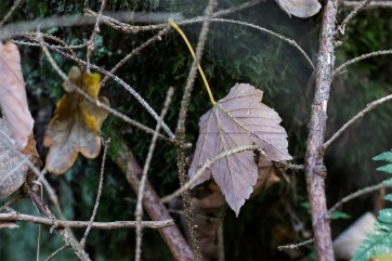 Herbstliches Petergensfeld (7)
