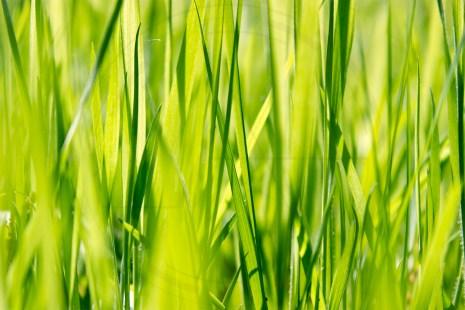 Green Silence (1)