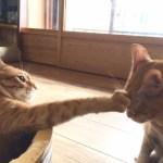 猫パンチが届かない可愛い猫たちと、猫パンチの秘密