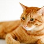 一人暮らしで猫を飼いたい!後悔する前に知っておくべきこと