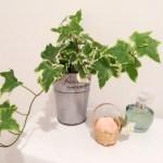 日陰で育つ観葉植物ならトイレでも育てられる!厳選5種