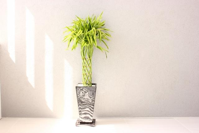 観葉植物を室内で育てる時の水やりの正しい方法と注意点
