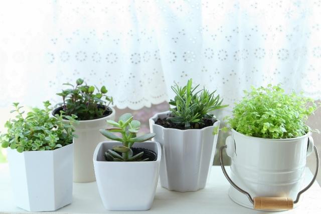 観葉植物を育てよう!虫がわかないための育て方 !