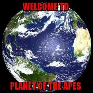 The world is a barrel of monkeys