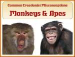 CCM Header Monkeys & Apes