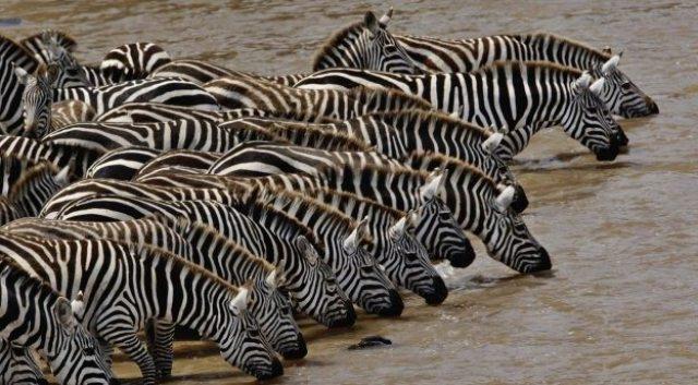 Masai_Mara_National_Reserve for tourism