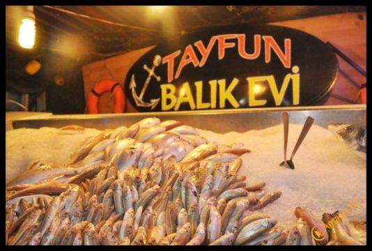 Tayfun Balıkçılık- Tayfun Bulu- Antalya TV- Muhabir Rüya Kürümoğlu (11)