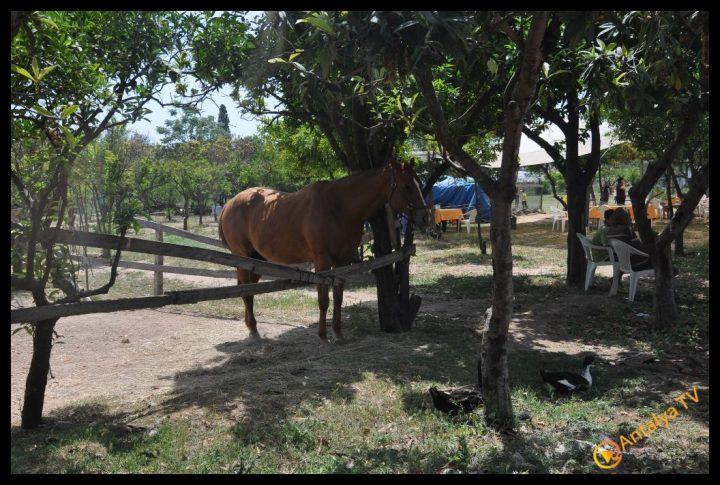 Nallı Bahçe  At Çiftliği Restaurant (142)