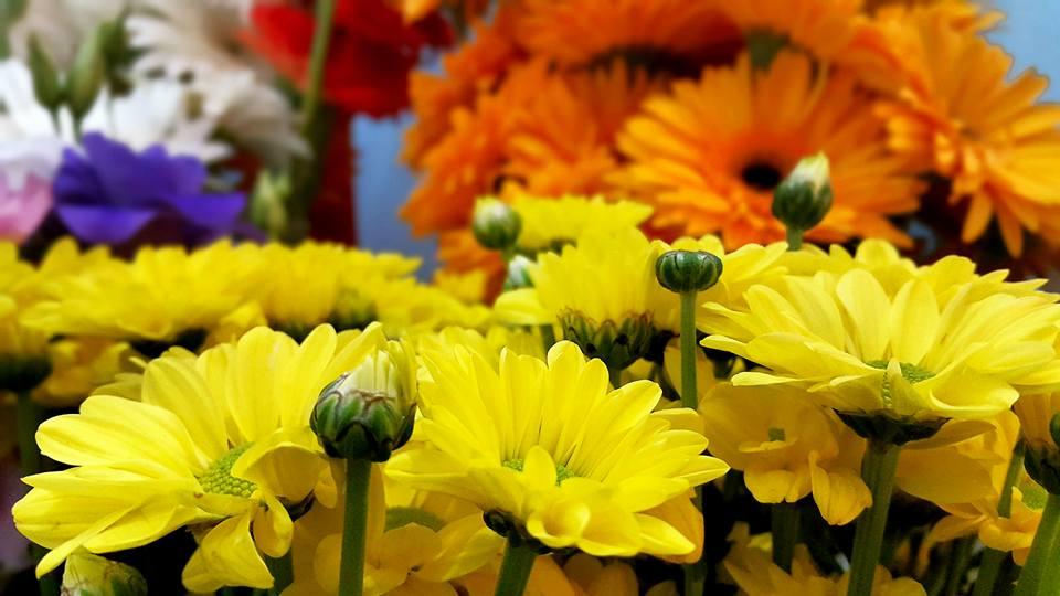 Antalya Işıklar Çiçekçi – 0538 9692901 Gülşen Çiçek Evi (15)